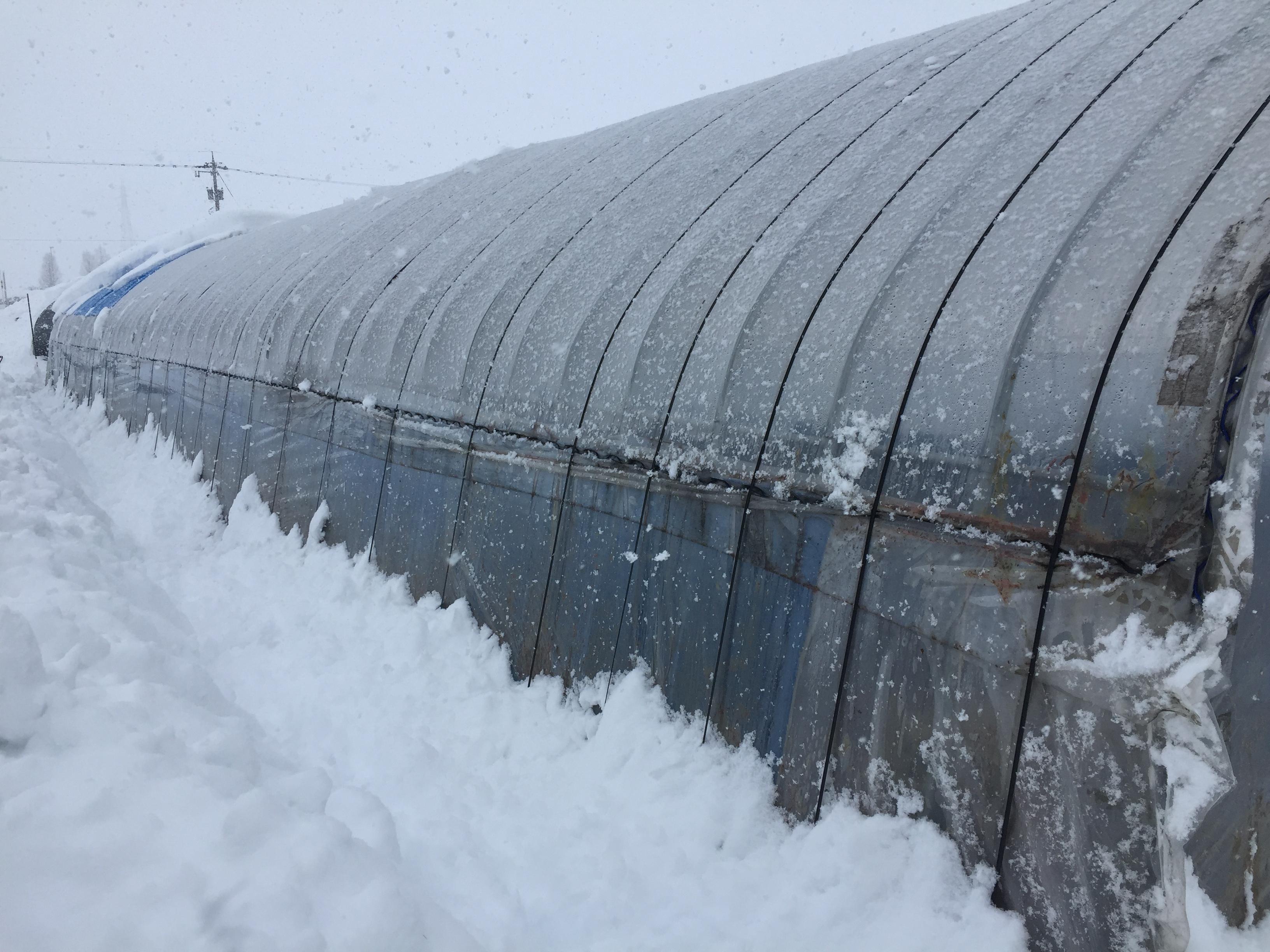 大雪、されどこれも大切な水資源